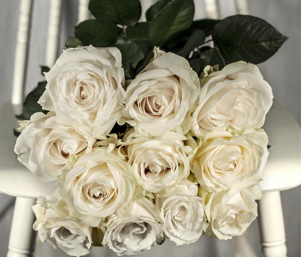 Valge roos