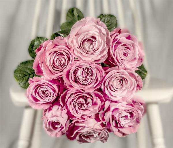 Roosa roos
