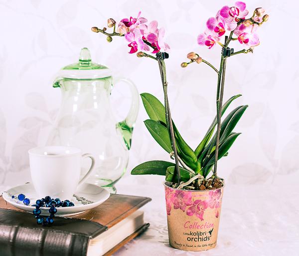 Kuuking Kolibri orhideede seeriast