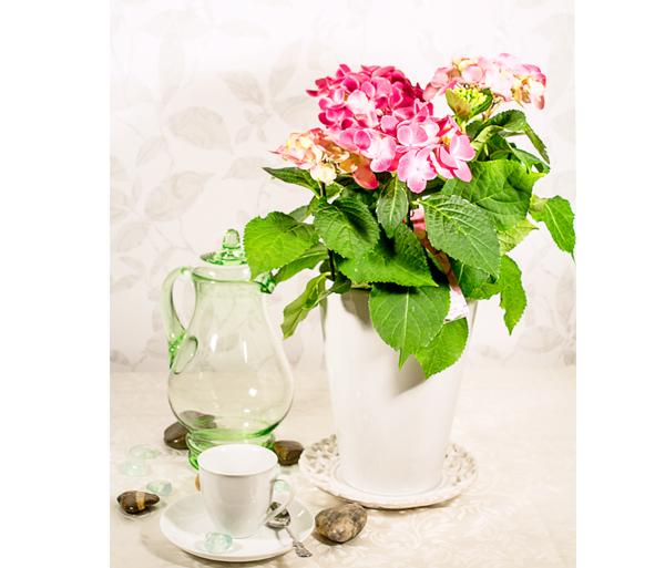 Hortensia lillepotis